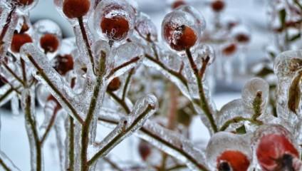 Зимняя сказка: шедевры природы