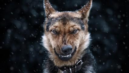 «Я злой, опасный, и лучше уходи!» Животные не в настроении