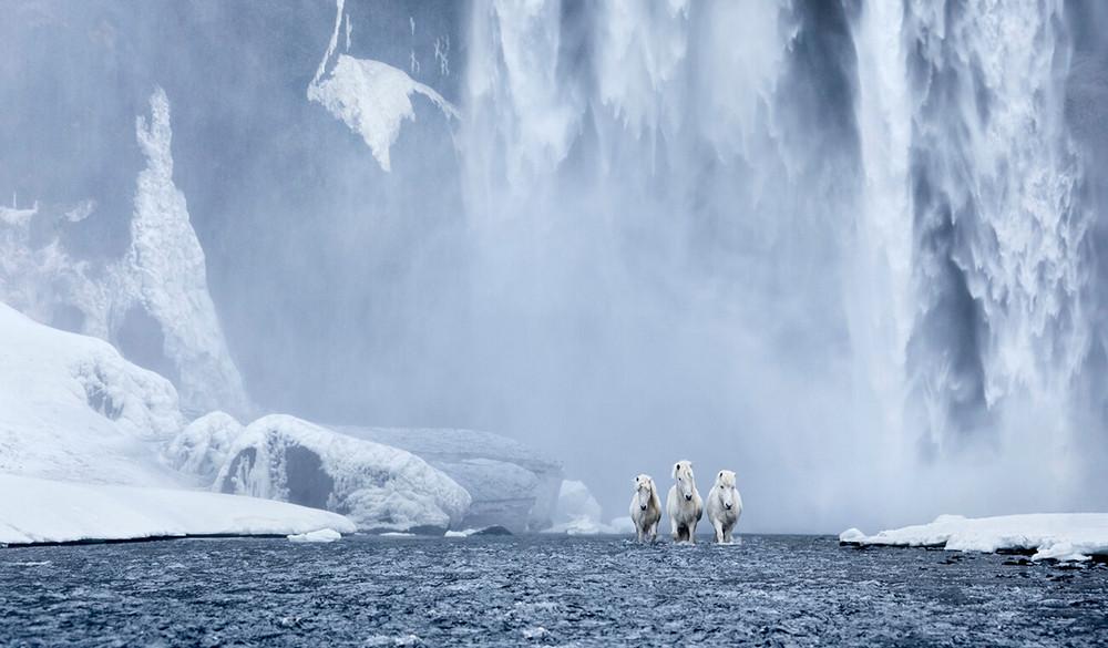 loshadi-Islandii-fotograf-Dryu-Doggett_1