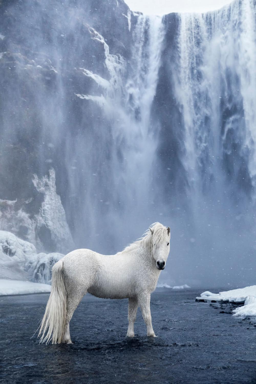 loshadi-Islandii-fotograf-Dryu-Doggett_10