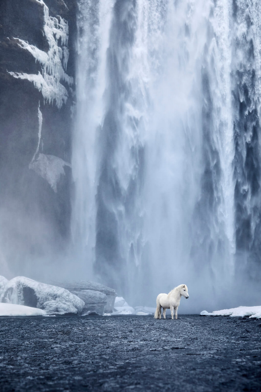 loshadi-Islandii-fotograf-Dryu-Doggett_11