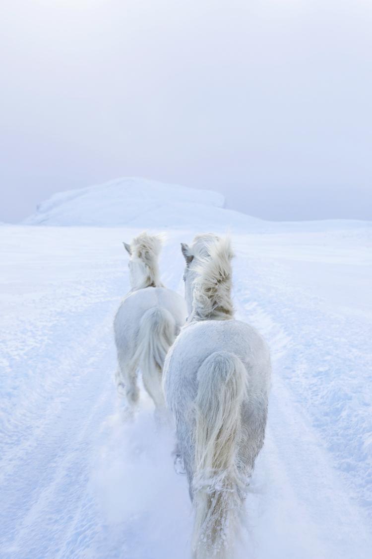 loshadi-Islandii-fotograf-Dryu-Doggett_12