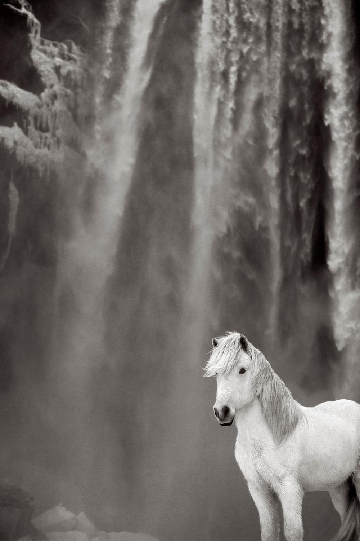 loshadi-Islandii-fotograf-Dryu-Doggett_13