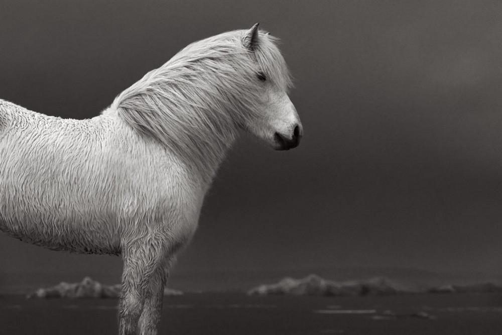 loshadi-Islandii-fotograf-Dryu-Doggett_14