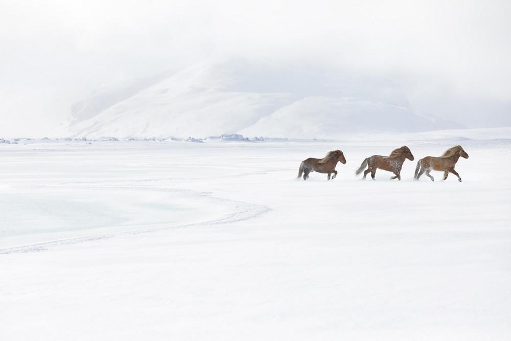 loshadi-Islandii-fotograf-Dryu-Doggett_15