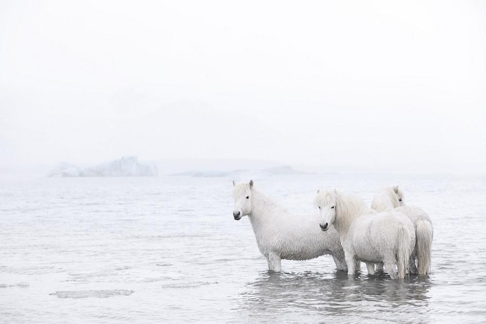 loshadi-Islandii-fotograf-Dryu-Doggett_16