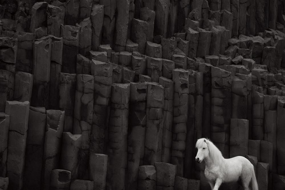 loshadi-Islandii-fotograf-Dryu-Doggett_17