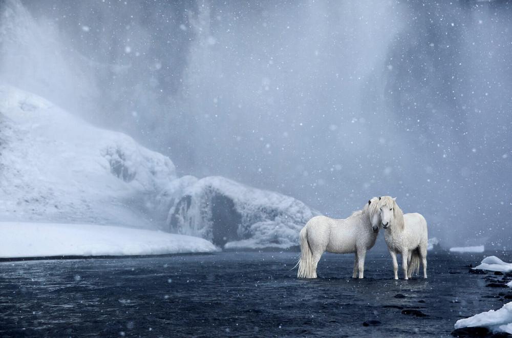 loshadi-Islandii-fotograf-Dryu-Doggett_18
