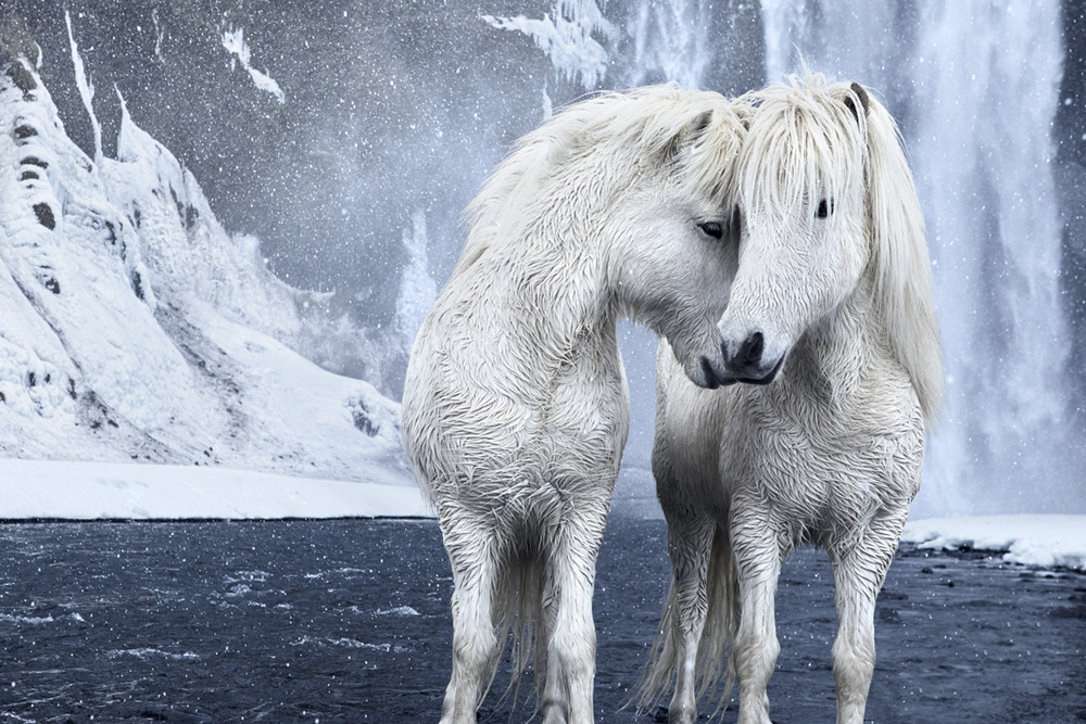 «В царстве легенд»: Исландия, дикая природа, лошади, фотокамера