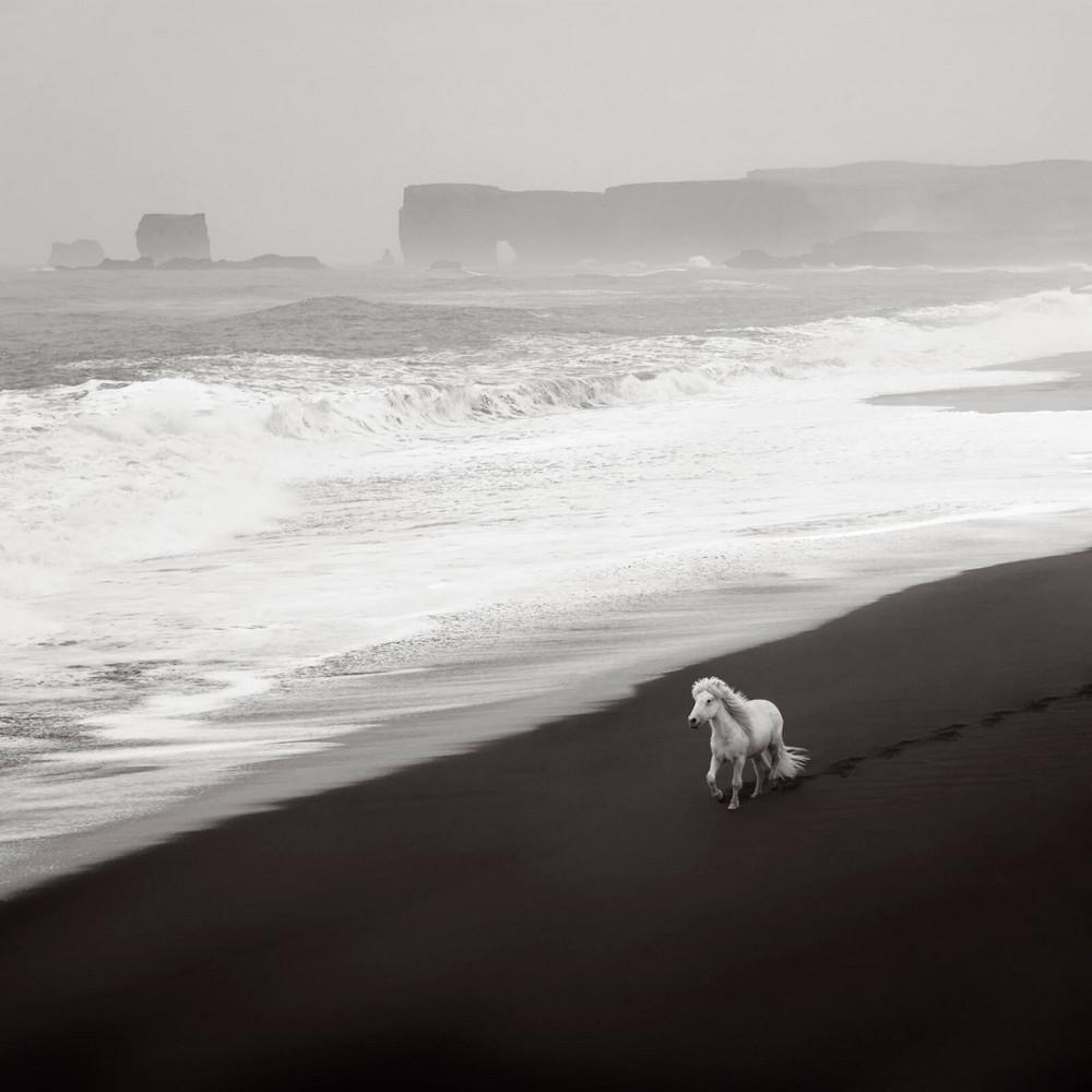 loshadi-Islandii-fotograf-Dryu-Doggett_21
