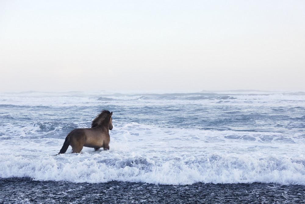 loshadi-Islandii-fotograf-Dryu-Doggett_3