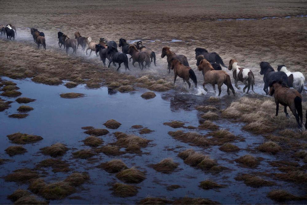 loshadi-Islandii-fotograf-Dryu-Doggett_4