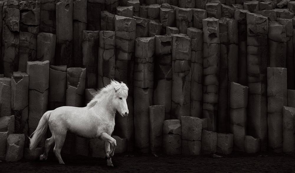 loshadi-Islandii-fotograf-Dryu-Doggett_5