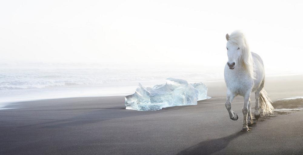 loshadi-Islandii-fotograf-Dryu-Doggett_7