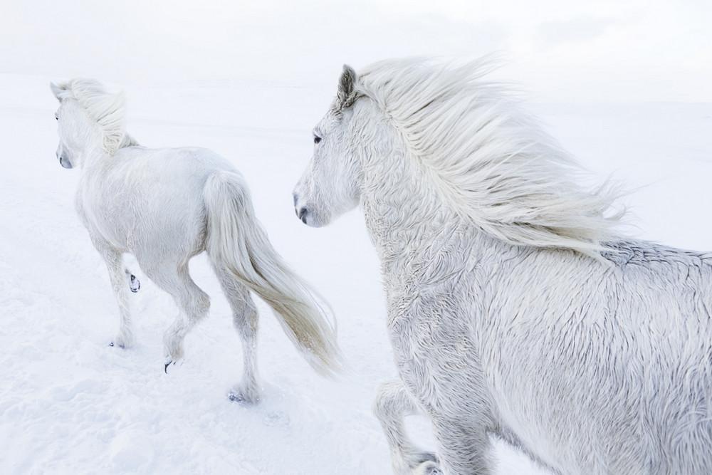 loshadi-Islandii-fotograf-Dryu-Doggett_8