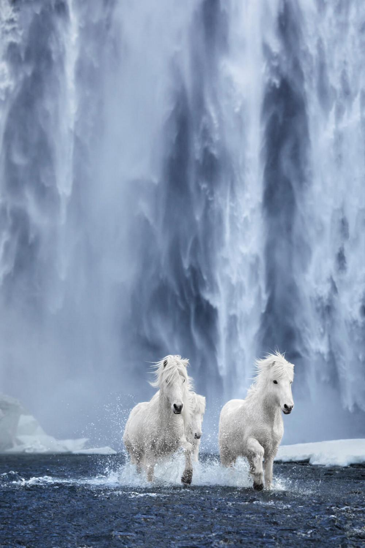 loshadi-Islandii-fotograf-Dryu-Doggett_9