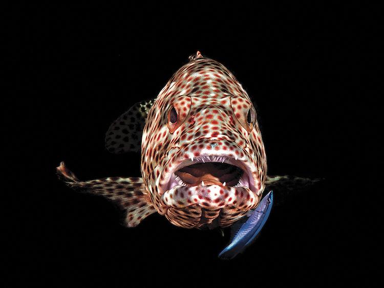 luchshie-podvodnye-foto-Through-Your-Lens-2018_13