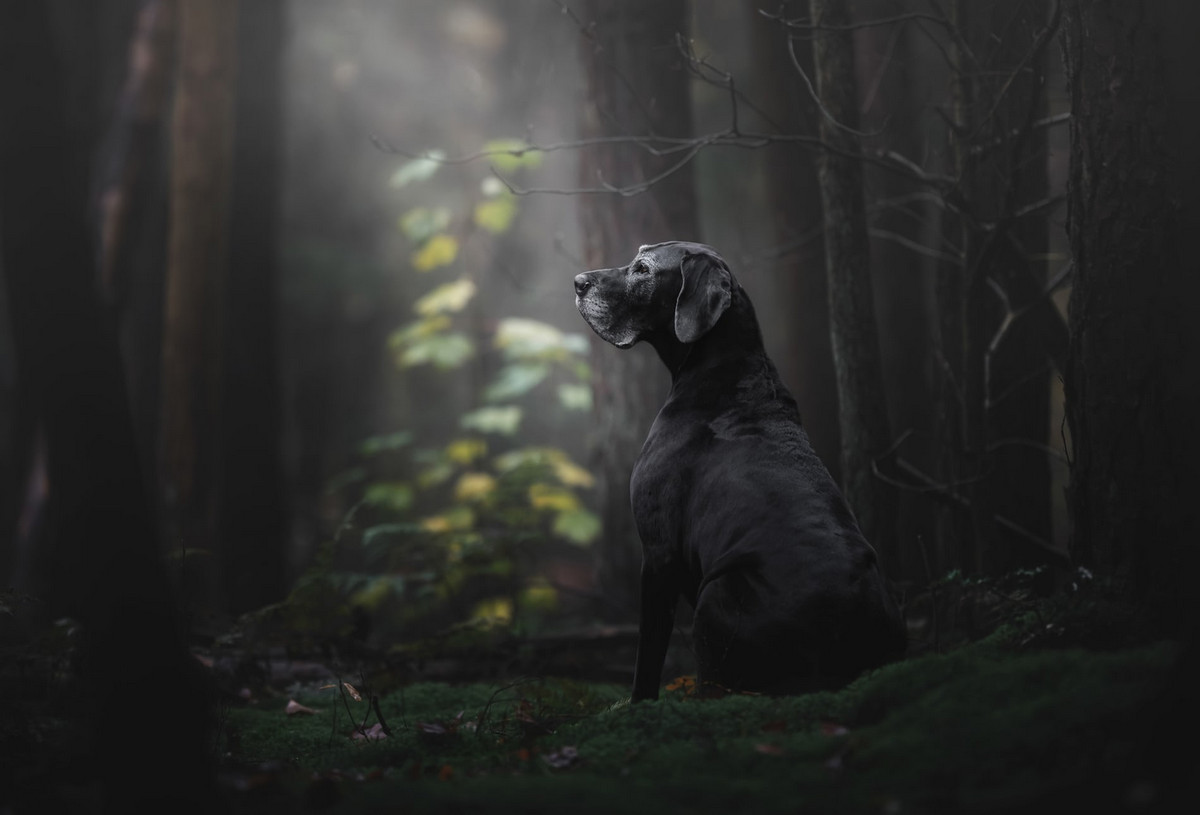 pobediteli-fotokonkursa-Dog-Photographer-of-the-Year-2018_1