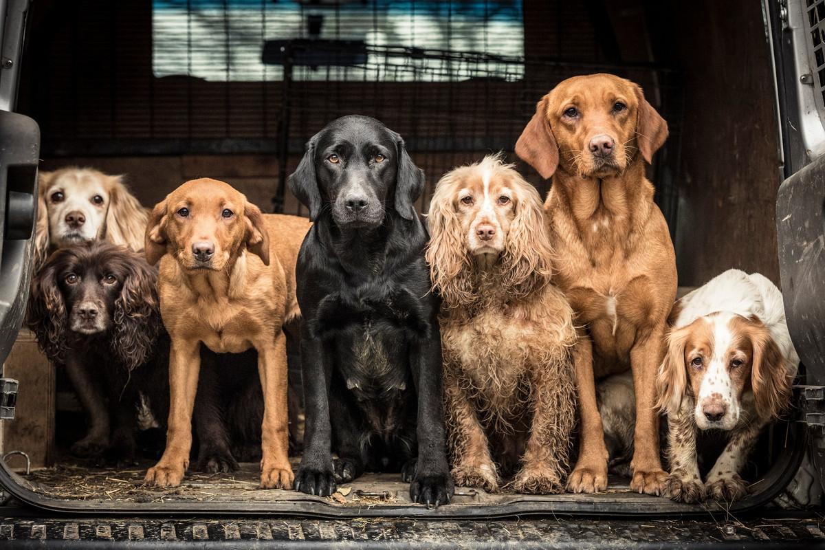 Лучшие работы конкурса фотографии Dog Photographer of the Year 2018