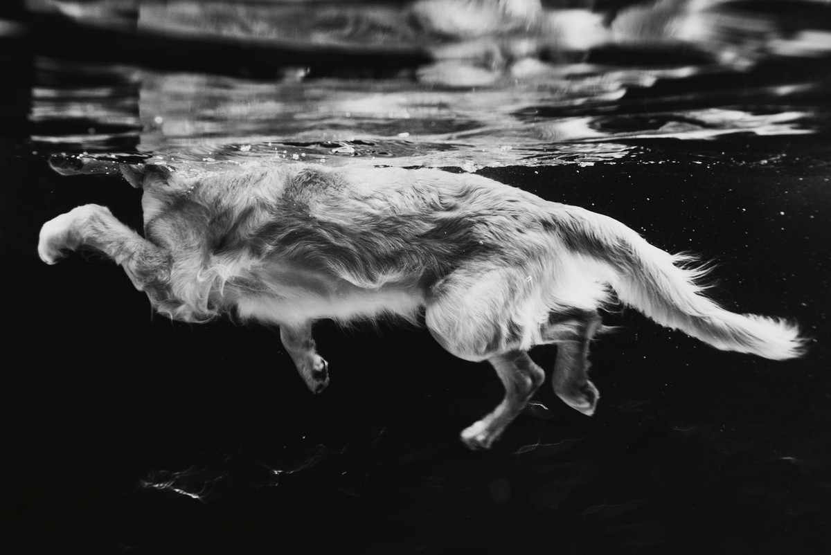 pobediteli-fotokonkursa-Dog-Photographer-of-the-Year-2018_7