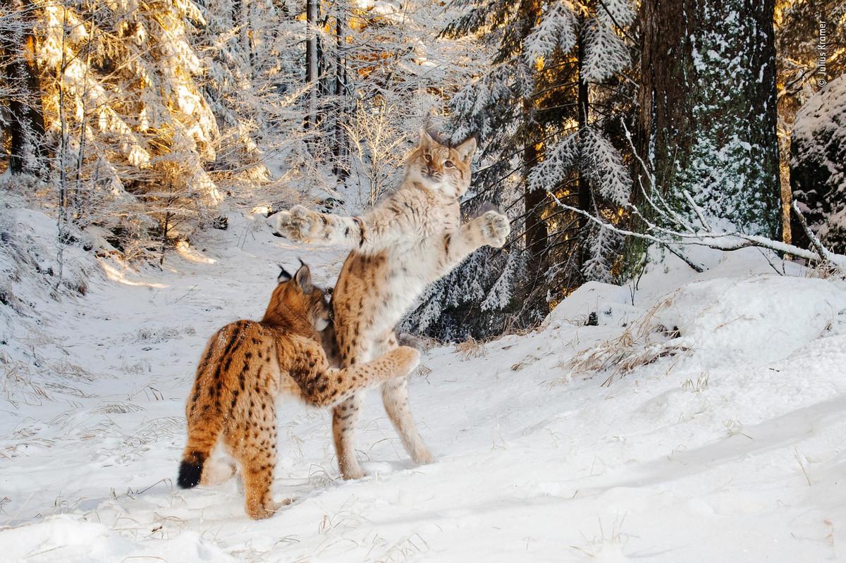 pobediteli_konkursa_wild_photographer_of_the_year_2018_3