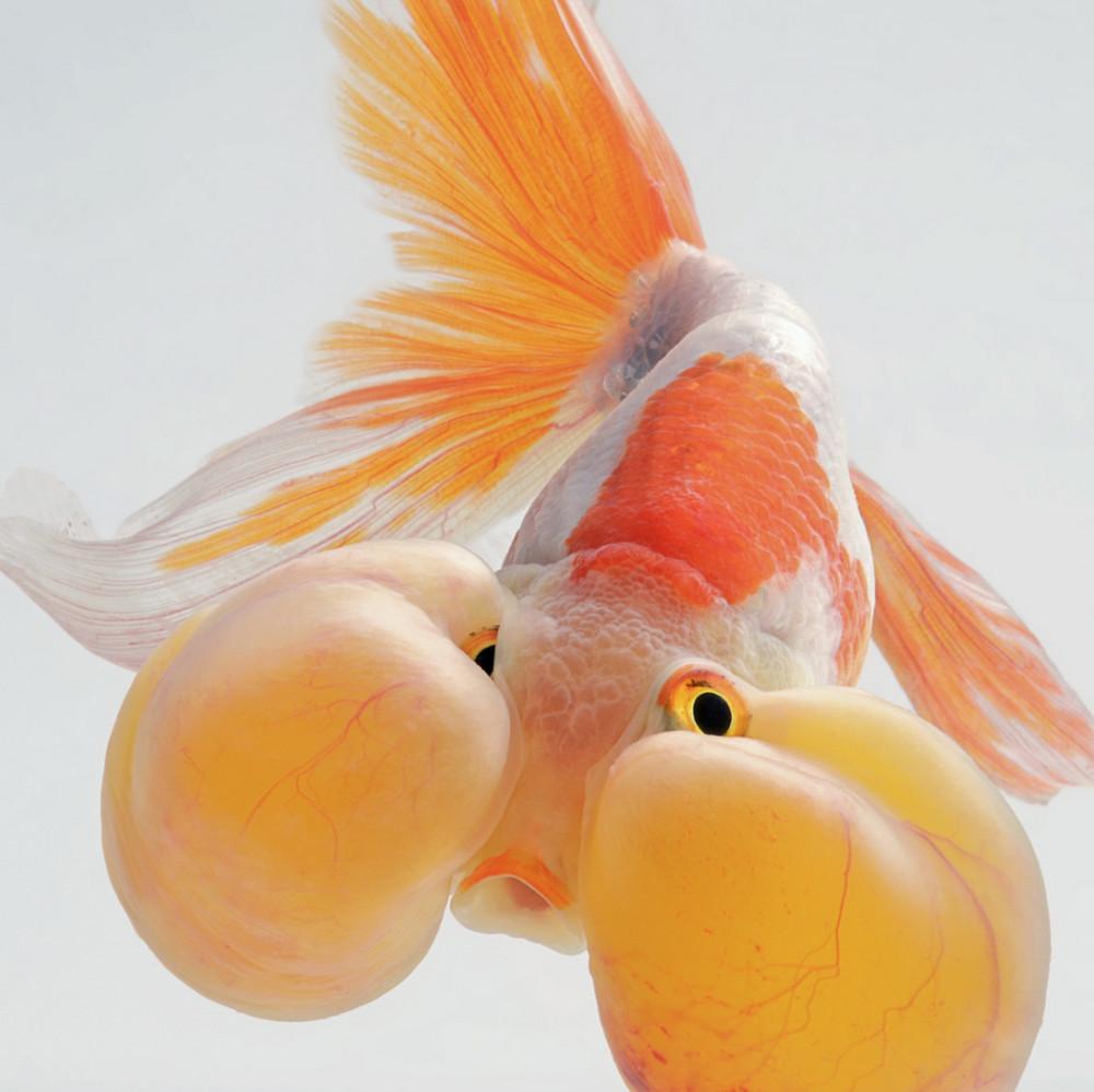 Не рыбки, а сказочные существа: работы тайского фотографа