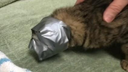 История чудом спасенной кошки, которую выбросили обернутой скотчем
