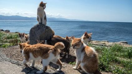 Кошачий рай: остров кошек Аосима