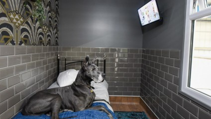 Самый необычный отель для собак: лучше, чем для людей