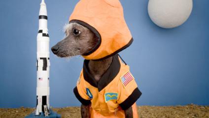 Фотомодель Чини: лучшие идеи образов для собаки