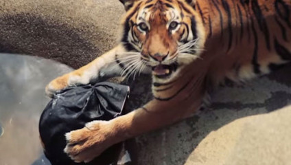 Новый тренд: джинсы, которые рвали хищники