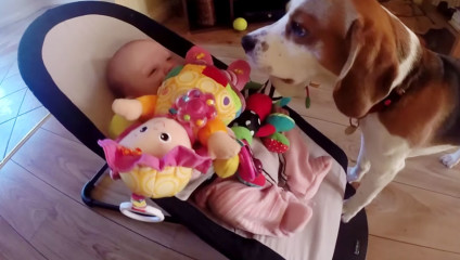 Собака успокаивает ребенка: забавное видео с биглем