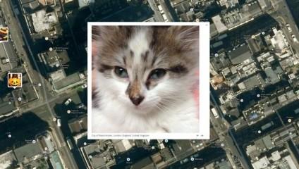 Дом кота с фото: теперь все знают, где живет ваш кот