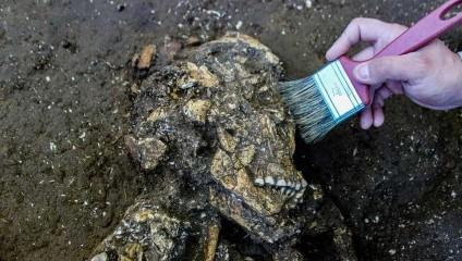 На стройке в Бразилии нашли два скелета возрастом в 6000 лет