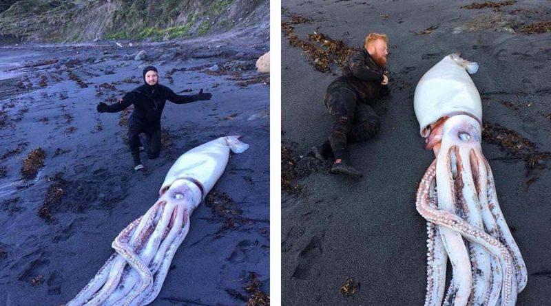 На пляже в Новой Зеландии нашли гигантского кальмара