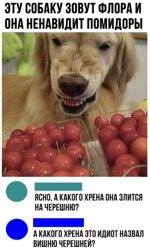 v-EKlSVfsKTkuA