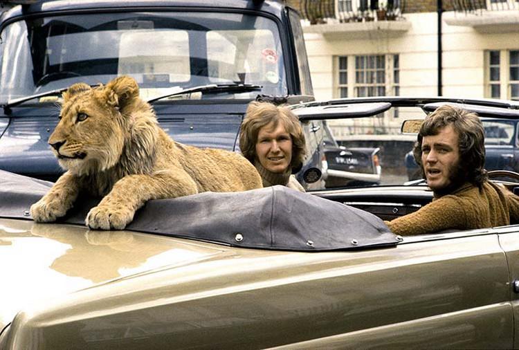 Кристиан – лев из Лондона: история, всколыхнувшая весь мир