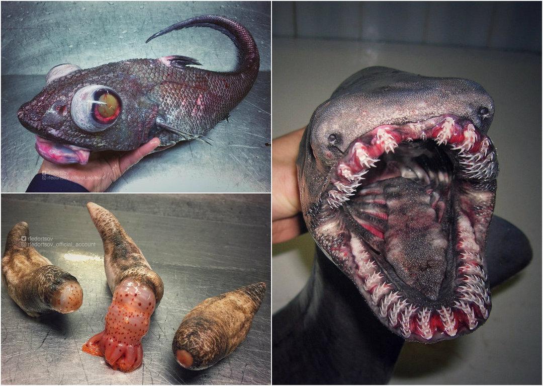 Рыбак из России публикует снимки страшных морских созданий