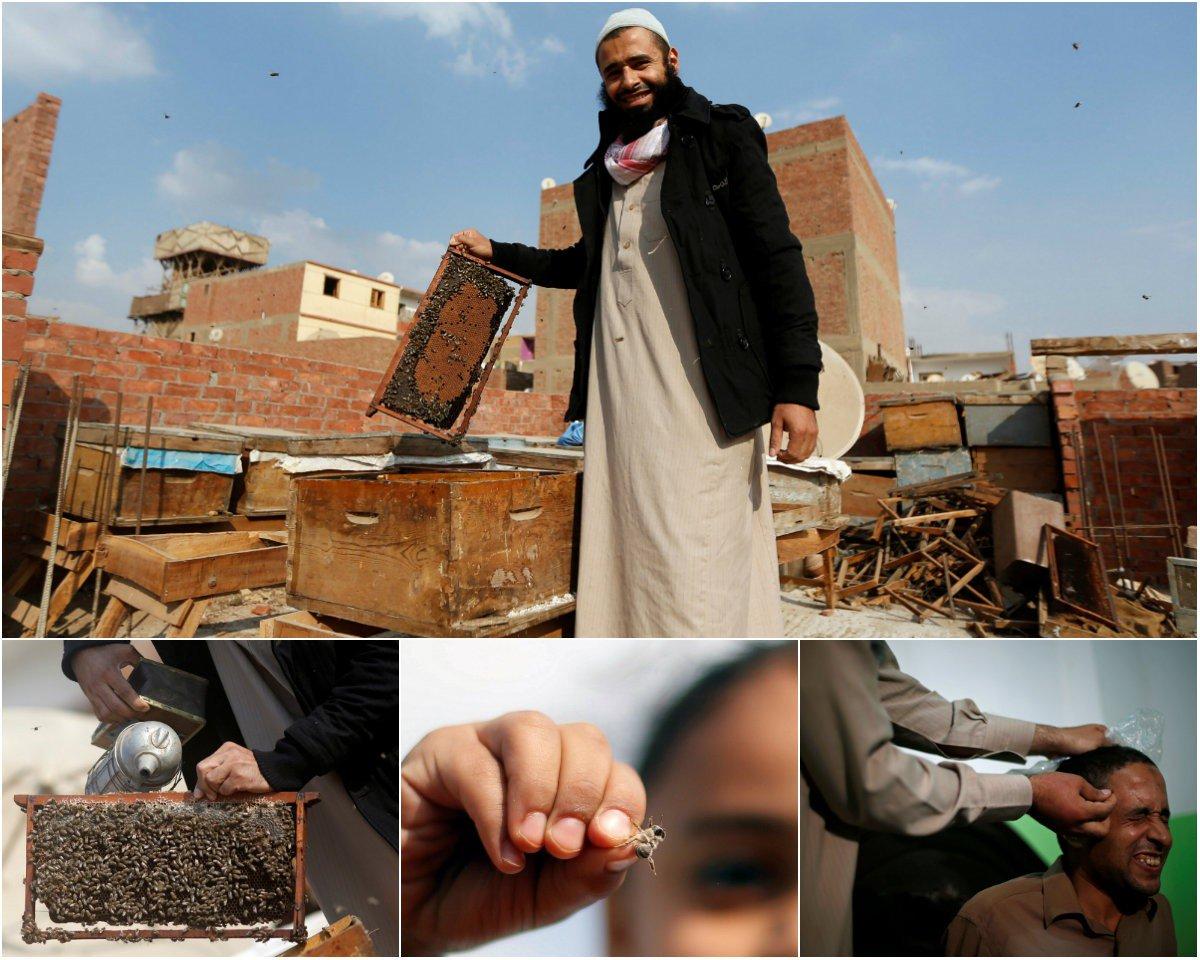 Египтянин дома разводит пчел, чтобы лечить их укусами людей