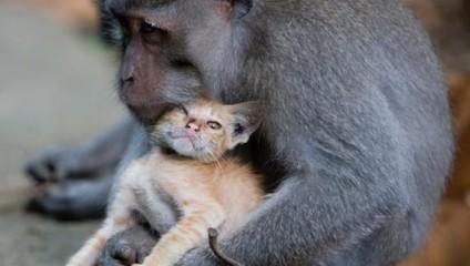 Животные удивляют: фотографии с «приемными» детьми