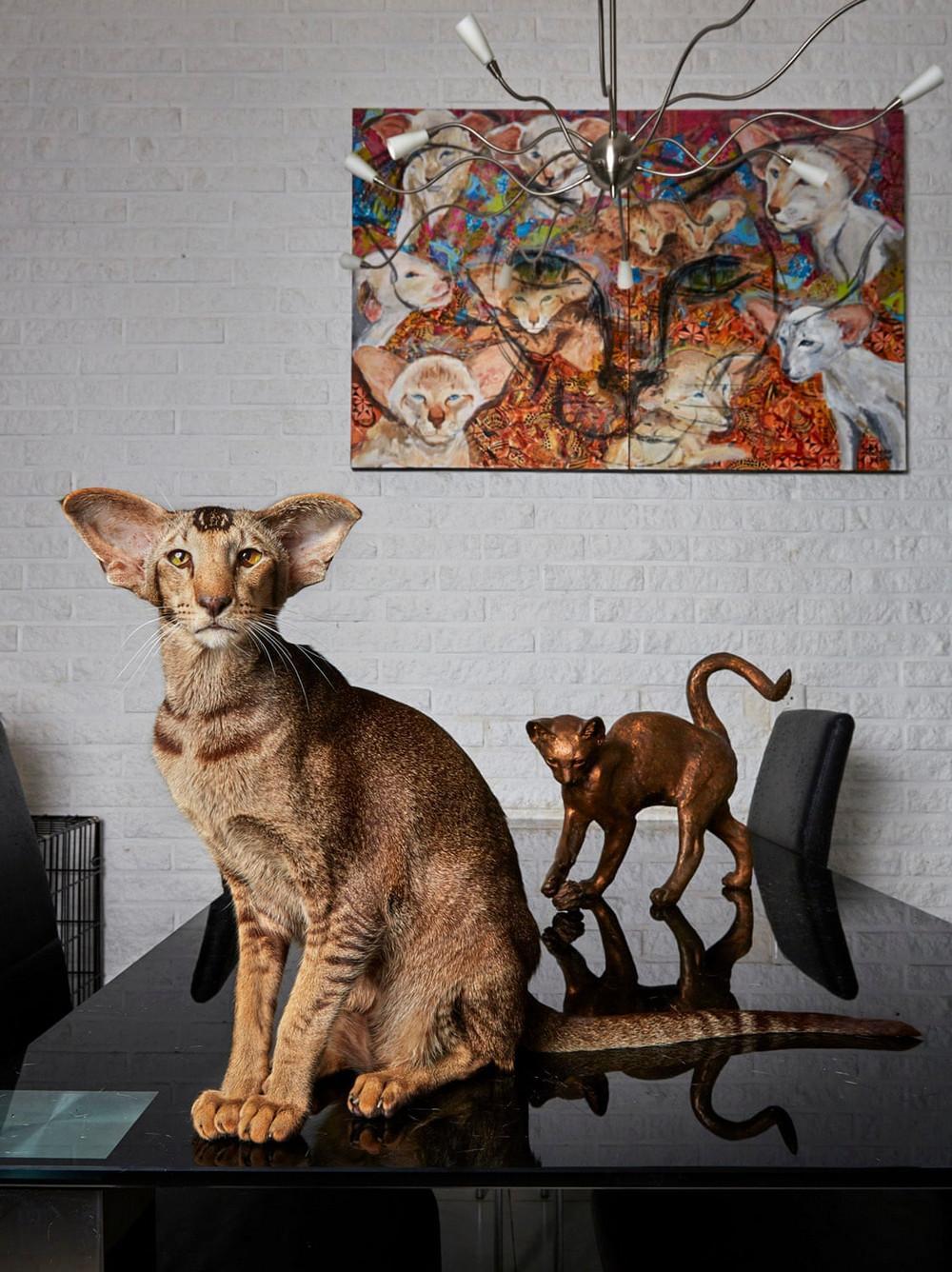 portrety-amsterdamskih-domashnih-zhivotnyh-Fotograf-Izabella-Rozendal_2