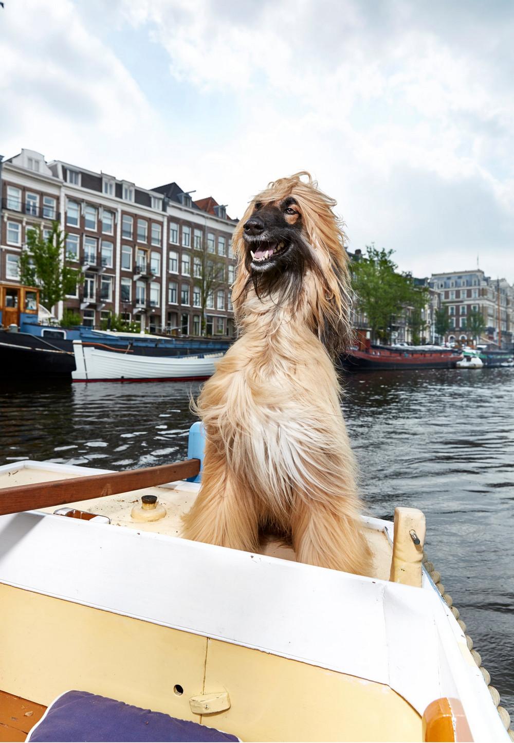 portrety-amsterdamskih-domashnih-zhivotnyh-Fotograf-Izabella-Rozendal_6
