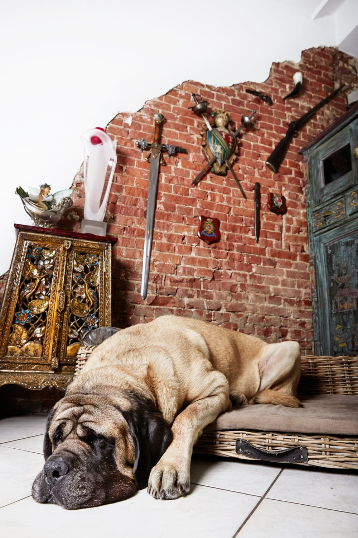 portrety-amsterdamskih-domashnih-zhivotnyh-Fotograf-Izabella-Rozendal_9