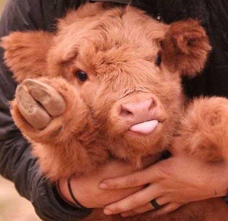 25малышей животных_ которые заставят улыбнуться даже суровых сотрудниц паспортного отдела (6)