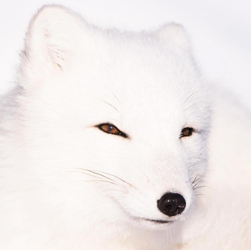 Арктическая дикая природа на снимках Одуна Ли Даля (11)