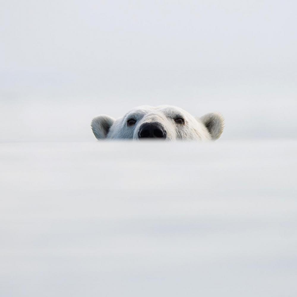 Арктическая дикая природа на снимках Одуна Ли Даля (12)