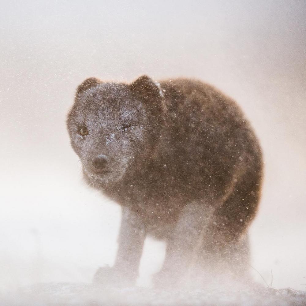 Арктическая дикая природа на снимках Одуна Ли Даля (13)