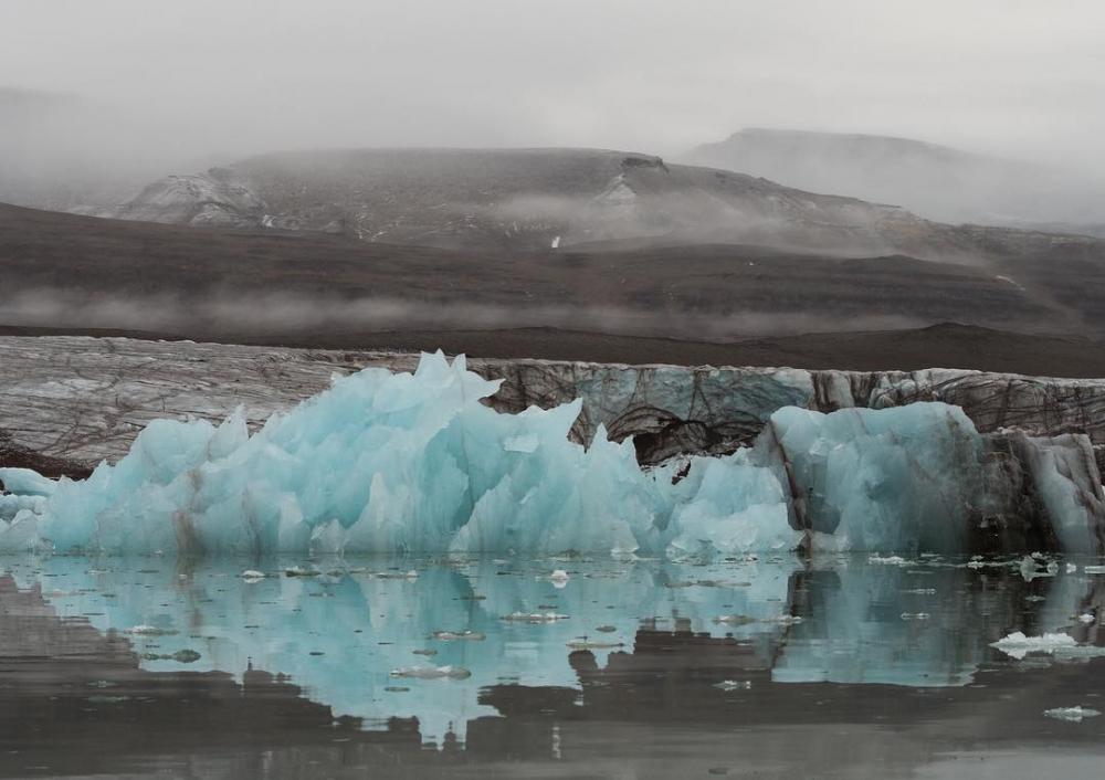 Арктическая дикая природа на снимках Одуна Ли Даля (14)