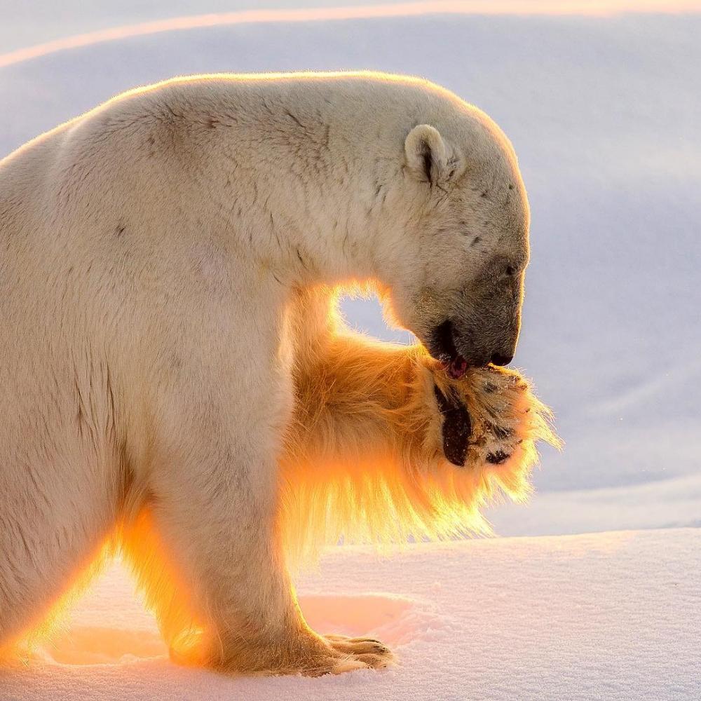 Арктическая дикая природа на снимках Одуна Ли Даля (6)