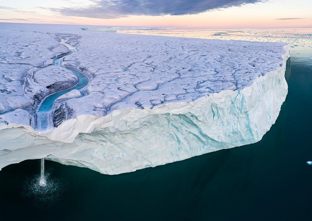 Арктическая дикая природа на снимках Одуна Ли Даля (9)